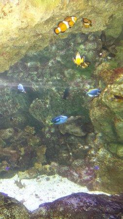Wildlife World Zoo and Aquarium: Nemo and Dori