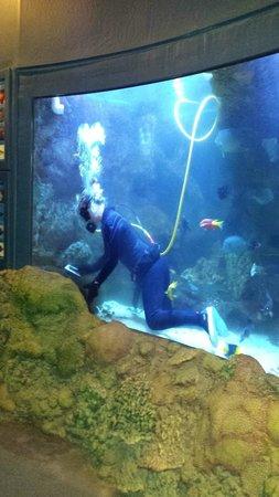 Wildlife World Zoo and Aquarium: Must keep tanks clean.