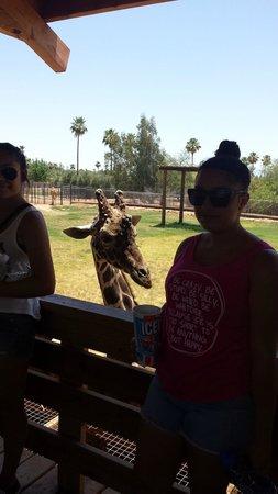 Wildlife World Zoo and Aquarium: Photo bombing Giraffe!