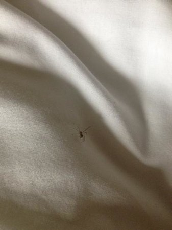Clarion Hotel Detroit Metro Airport: This spider made me look closer at the sheets