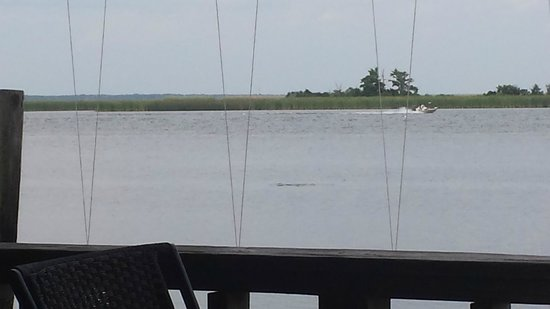 Boss Oyster: View from the deck - birds & dolphins abound!