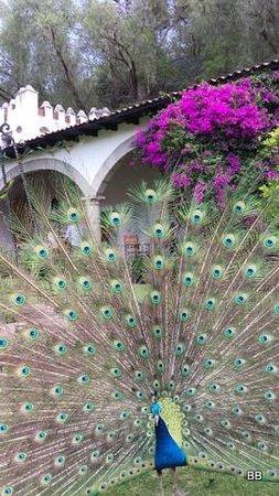 Museo Dolores Olmedo Patino: jardins