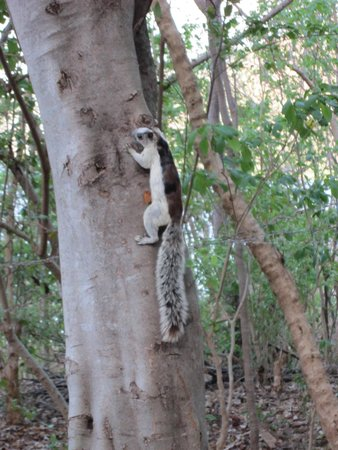 San Simian Eco Lodge: squirrel