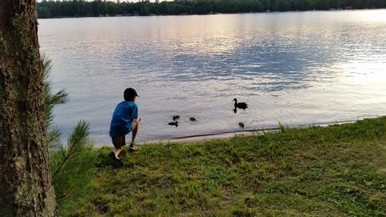 A1 Gypsy Villa Resort : My 10-year-old, making friends with momma & baby ducks, right in front of our cabin.