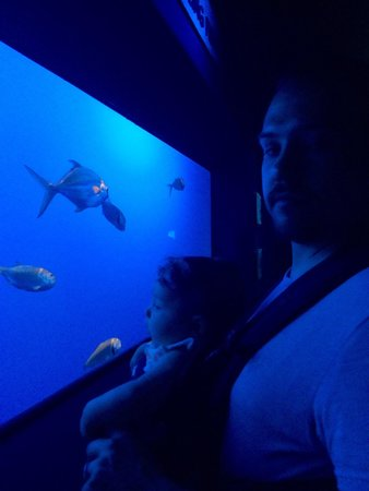 Ripley's Aquarium of the Smokies: Baby loving the colors