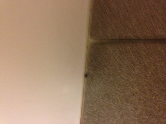 Holiday Inn Express North Platte: Bug by tub