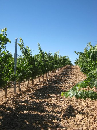 Gourmet Madrid Tours: vineyard