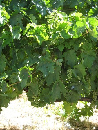 Gourmet Madrid Tours: grapes