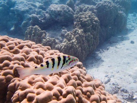 Tiahura Beach: Snorkeling between Motus Tiahura and Fareone