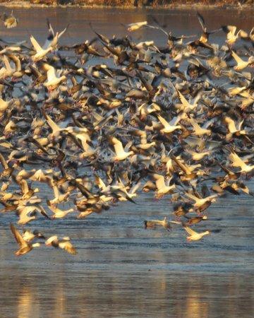 birds year round, different each season