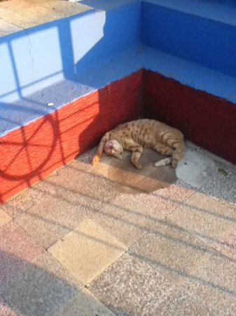 St. Thomas Mount National Shrine: This cat found a place to lounge at the base of the shining cross.