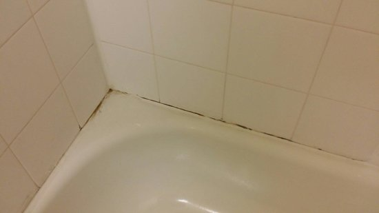 Extended Stay America - Denver - Aurora South: Bath tub mold!