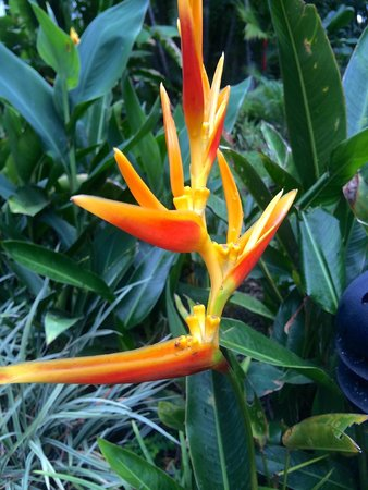 Caravan Tours: Exotic flowers are a main attraction