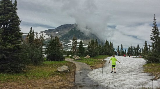 Logan Pass: patches of green and patches of snow