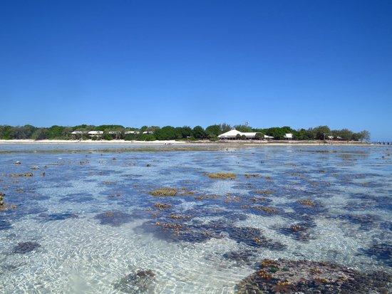 Heron Island Resort: Island while taking a walk on the reef.