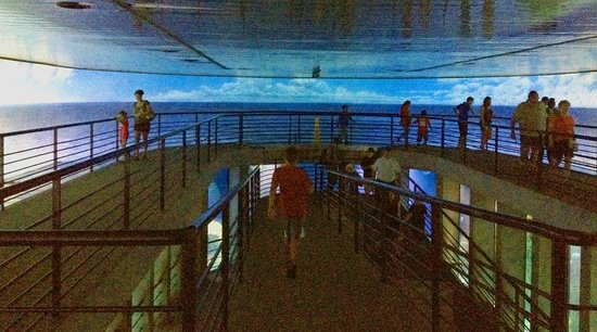 National Aquarium, Baltimore : サメの展示コーナーは螺旋状に移動していきます