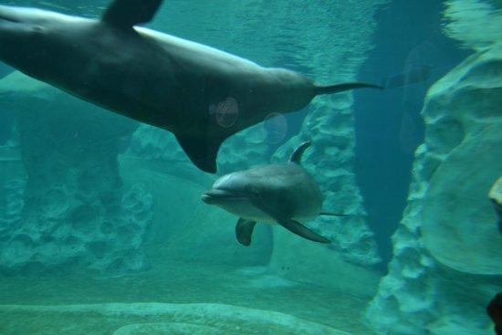 Georgia Aquarium: Dolphins in the morning