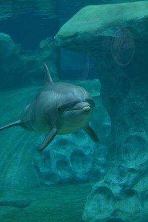 Georgia Aquarium: Early morning dolphin viewing