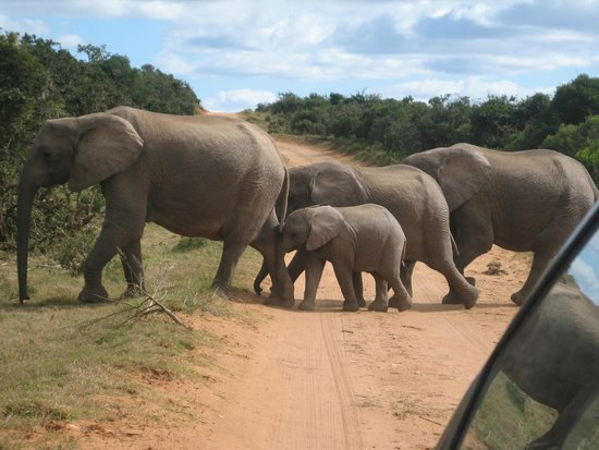 On The Bay Guesthouse: Addo Elephant park