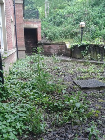 Oulton Hall & Spa: Our View of weeds :-(