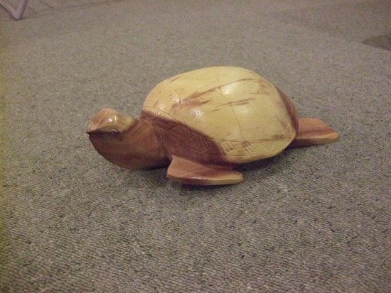 Naviti Resort: one of the turtles I had carved.He weighs about 1 kg