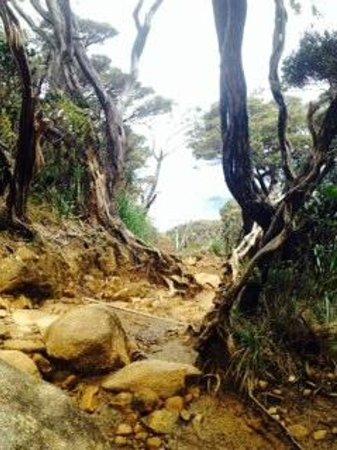 Borneo Dream Travel & Tours: Low's Peak hiking trail (descent)