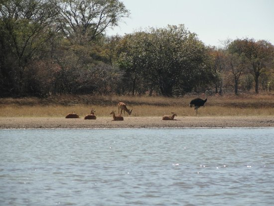 Chaminuka Game Reserve: boat ride
