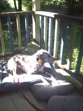 The Guest House Bed and Breakfast: Faith soaking up the sun on the porch