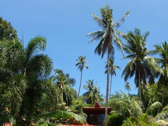 Cyana Beach Resort: Garden