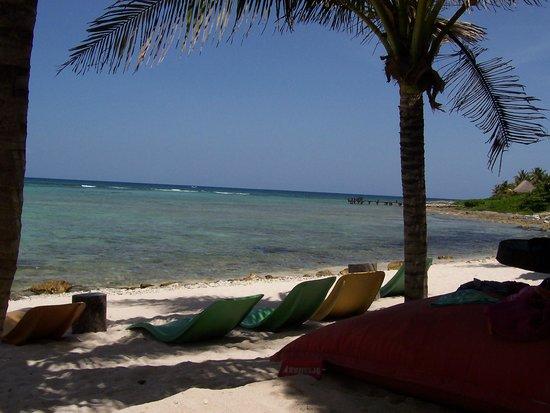 La Buena Vida Restaurant : La playa de corales