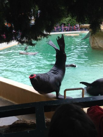 Heidelberg Zoo: Well-rehearsed sea lions' and seals' show