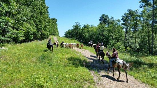 Malibu Dude Ranch: Cattle drive