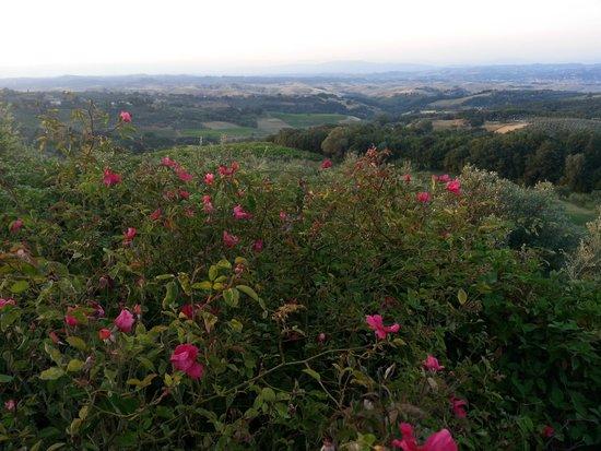 Rigone in Chianti : Aussicht