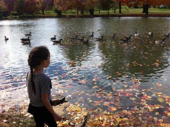 ‪‪Chillicothe‬, ‪Ohio‬: Feeding the ducks‬