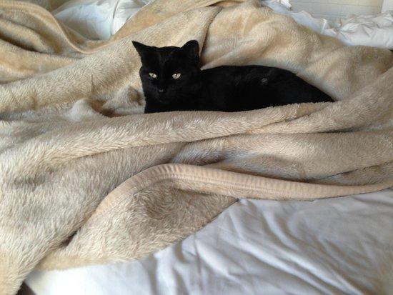 Rivendell Guest House: Resident black cat
