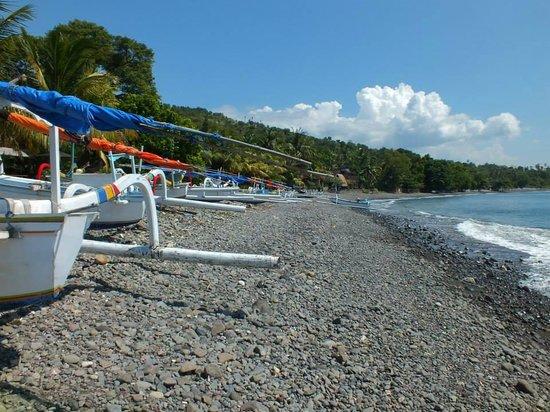 Rising Star Beach Resort: Binatang Beach