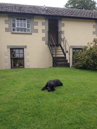 Blessingbourne Apartments: Lazy dog!