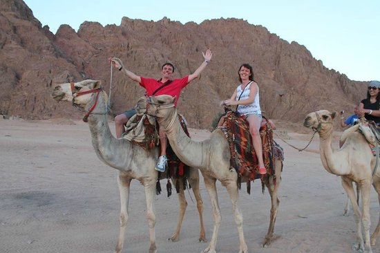Sinai Safari Adventures: Star Gazing trip, but camels first!!