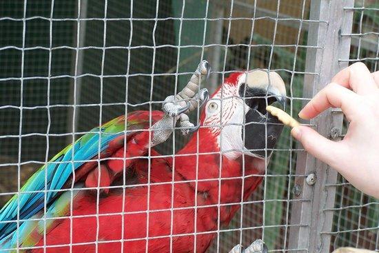 St. Maarten Zoo: Feeding a friend