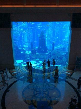Atlantis, The Palm : Aquarium
