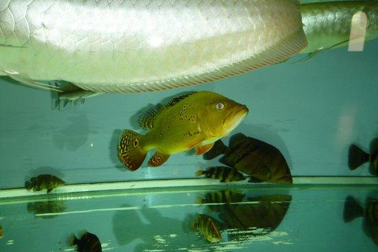 Chau Long Sapa Hotel: аквариум в холле3