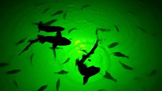 Keys Fisheries : Feeding the fish