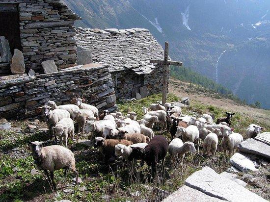Valle Verzasca: Corte Nuovo im Val d´Agro über Lavertezzo