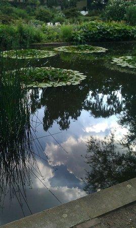 Parque Planten un Blomen: Still life