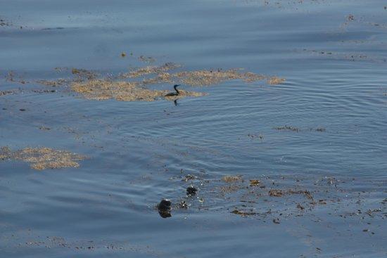 Monterey Plaza Hotel & Spa: Ocean view (wildlife)