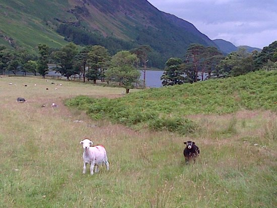 The Borrowdale Hotel: View of Buttermere Lake