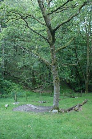 Living-Room Treehouses: Swing