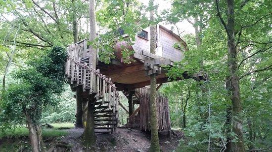 Living-Room Treehouses: Tree house