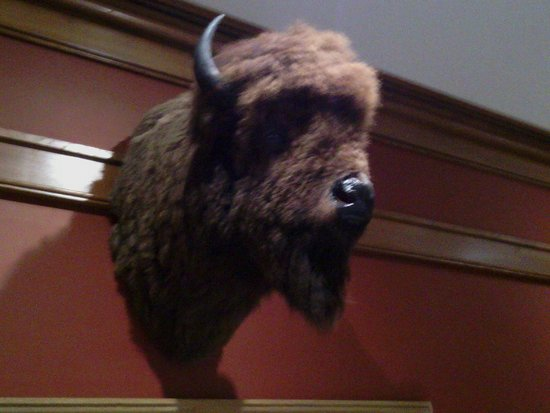 Frederic Remington Art Museum: Buffalo head at the museum