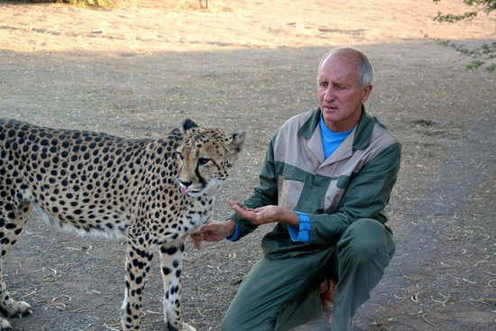 Quivertree Forest Rest Camp : Uitleg over de cheetahs